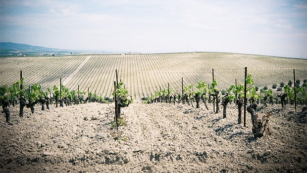 Albariza soils in the sherry region