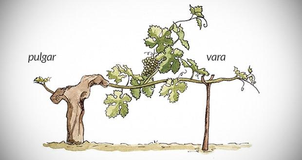 Vara & pulgar - Jerez