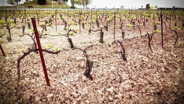 Background: Vine growing: vara & pulgar
