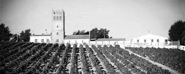 El Majuelo - El Castillo - Macharnudo